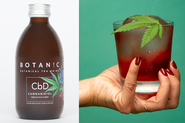 First CBD tea drink launched | Food and Drink Technology