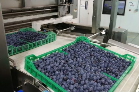 New Tray Tipper automates fruit delivery