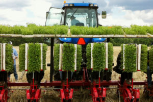 Tate & Lyle's equity investment in Sweet Green Fields