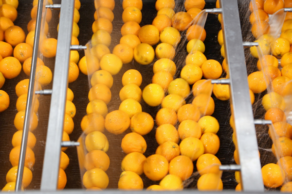 AMC Group showcases plant-based and allergen-free production facility