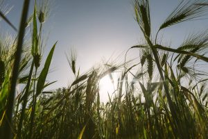 Green eating driving plant-based innovation, says data analyst