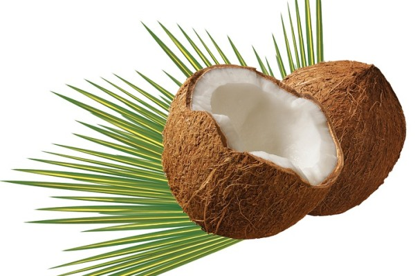 Coconut Milk Suppliers