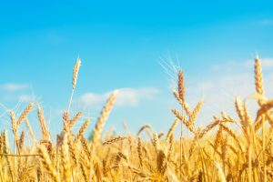 New name for Limagrain's ingredients sector