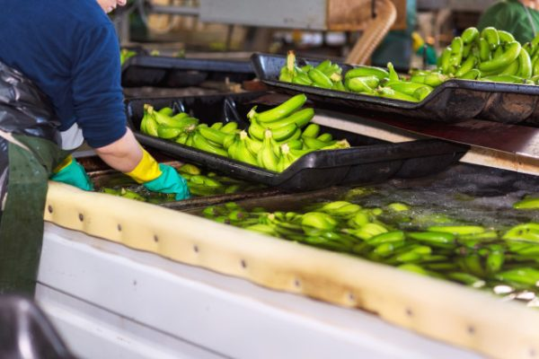 FDA outlines new guidelines for US imports   Food and Drink Technology