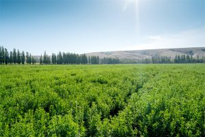 Tate & Lyle launches stevia sustainability project with Earthwatch